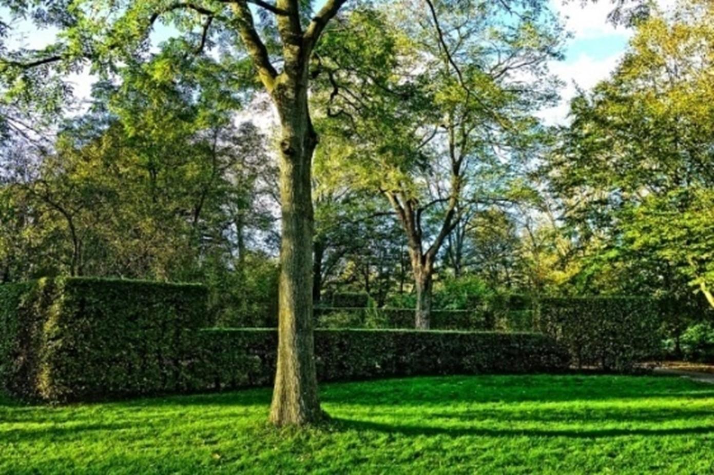 Hedged Walls